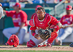 6 March 2016: St. Louis Cardinals catcher Alberto Rosario in action during a Spring Training pre-season game against the Washington Nationals at Roger Dean Stadium in Jupiter, Florida. The Nationals defeated the Cardinals 5-2 in Grapefruit League play. Mandatory Credit: Ed Wolfstein Photo *** RAW (NEF) Image File Available ***