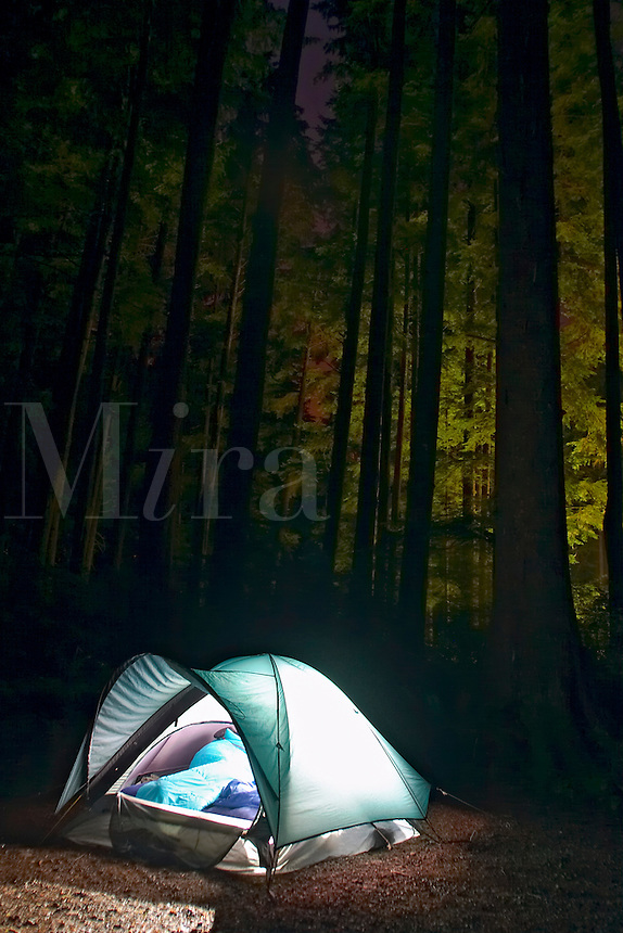 Tent glowing below trees, Mora Campground, Olympic National Park, Olympic Peninsula, Clallam County, Washington, USA<br />