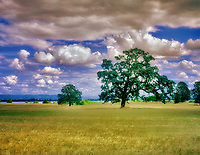 Pasture with oak trees and clouds and Fern Ridge Reservoir. Oregon.