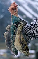 Europe/Norvège/Iles Lofoten/Vitken: Atelier de Ceramique - Ase présente ses skrei cabillaud en céramique