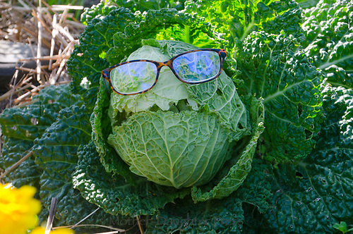 Cabbage with glasses and silly face