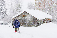 Man walks by log cabin during heavy falling snow, in Wiseman, Alaska, Arctic.