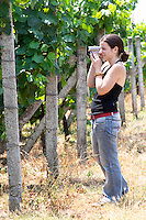 Radost in the vineyard. Kantina Miqesia or Medaur winery, Koplik. Albania, Balkan, Europe.