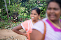 Tourists visit the Pinnawala Elephant Orphanage in Sri Lanka.