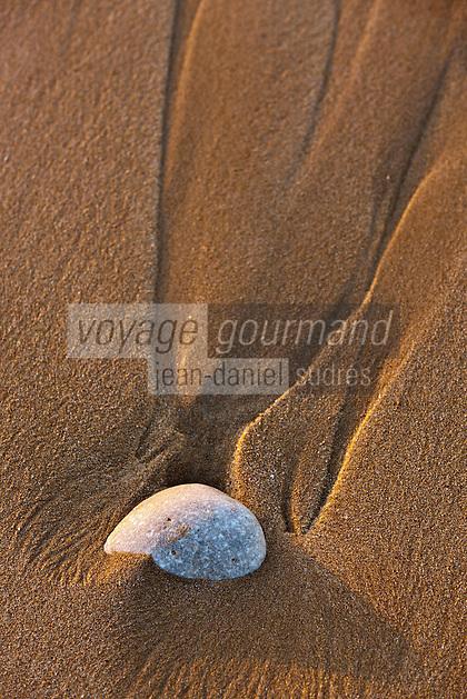 Europe/France/Poitou-Charentes/17/Charente-Maritime/Ile de Ré/Saint-Clément-des-Baleines: Plage de la Conche des Baleines, coquillage dans le sable