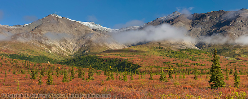 Panorama of autumn tundra in the Alaska Range, Denali National Park, Interior, Alaska.