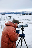 USA, Wyoming, Yellowstone National Park, wolf-watcher watches a wolf pack in Blacktail Deer Plateau