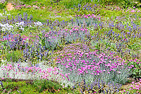 Ohme Gardens, Wenatchee, WA