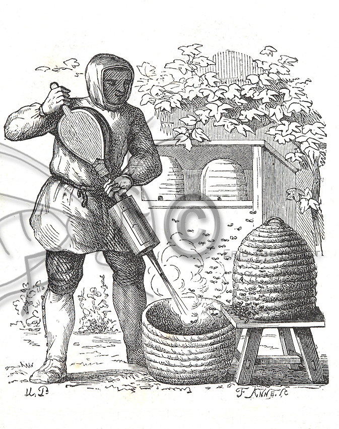 Beekeeping ancient drawing