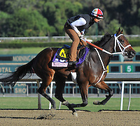 Scandalous Act, trained by KathleenO'Connell, trains for the Breeders' Cup Juvenile Fillies at Santa Anita Park in Arcadia, California on October 30, 2013.