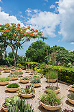ZANZIBAR, Nungwi Beach, Plants and Tress at the Gardens of Hideaway Resort
