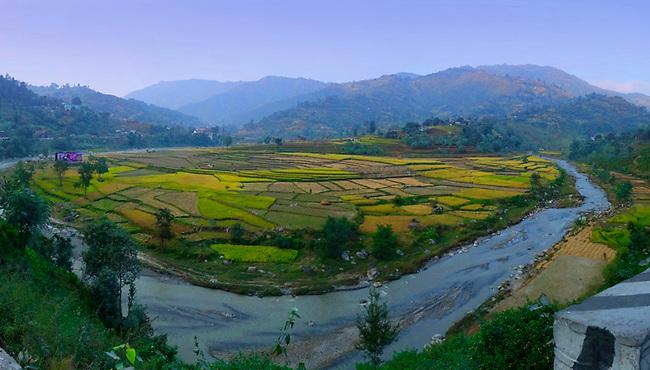 rice field near Kathmandu