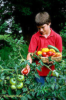 HS09-039z  Tomato - boy picking tomatoes, celebrity variety