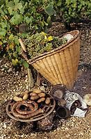 Europe/France/89/Yonne/AOC Chablis: Les vendanges de Jean Durup à Maligny - Cuisson du repas des vendangeurs dans les vignes