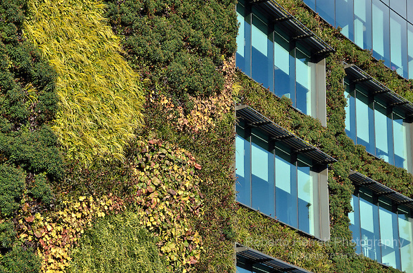 Office building covered with green plants