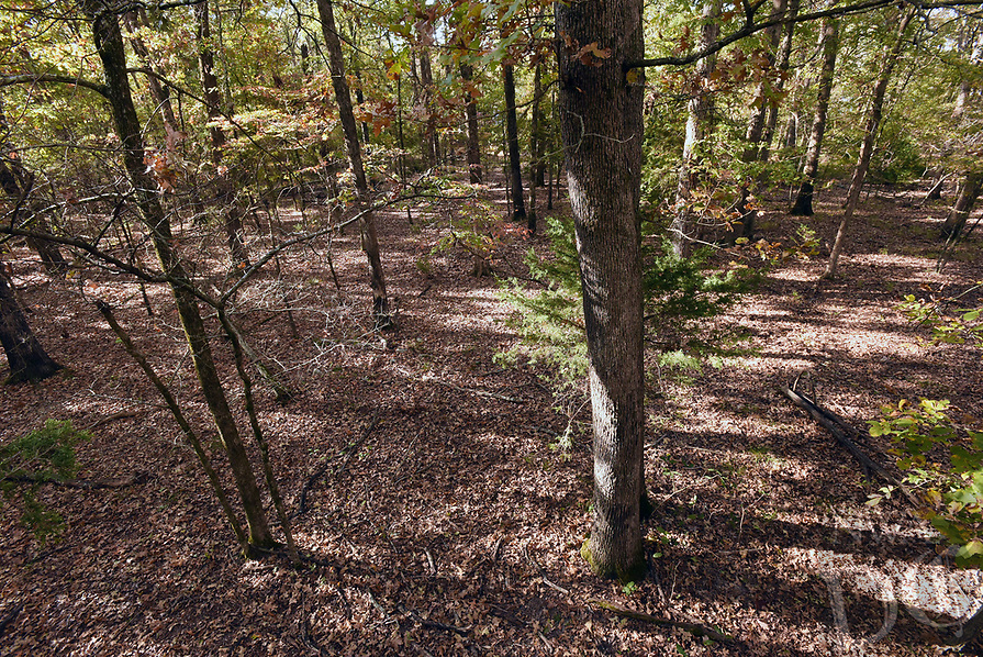 NWA Democrat-Gazette/FLIP PUTTHOFF<br />A tree stand offers a bird's-eye view of the forest       Oct. 30 2017    and gets a hunter above a deer's line of sight. Here's a view from the author's tree stand at Camp See No Deer.