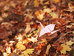 Origami paper crane sitting on a mushroom in autumn nature scenery