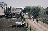 passing the cows<br /> <br /> 92nd Schaal Sels 2017 <br /> 1 Day Race: Merksem &gt; Merksem (188km)