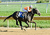 Stormy Holiday winning at Delaware Park on 10/11/12