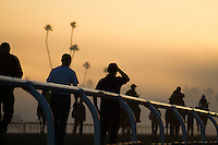 The Europeans horses headed to the turf coarse this morning in preparation of Breeder's Cup at Santa Anita Park in Arcadia, California on October 31, 2012.