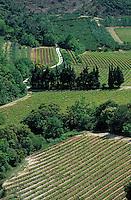 Europe/France/Provence-Alpes-Côte d'Azur/84/Vaucluse/Env de Bedoin: Le vignoble AOC Côtes-du-Ventoux