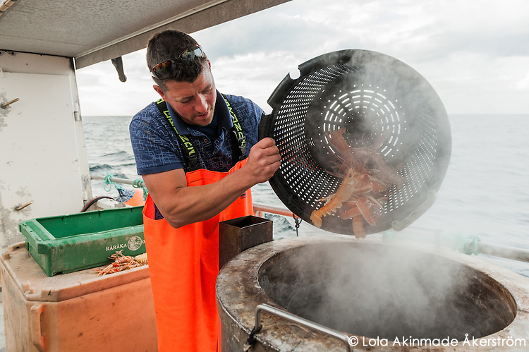 Fisherman Martin Olofsson steams a few buckets of langoustines directly on board his fishing boat.