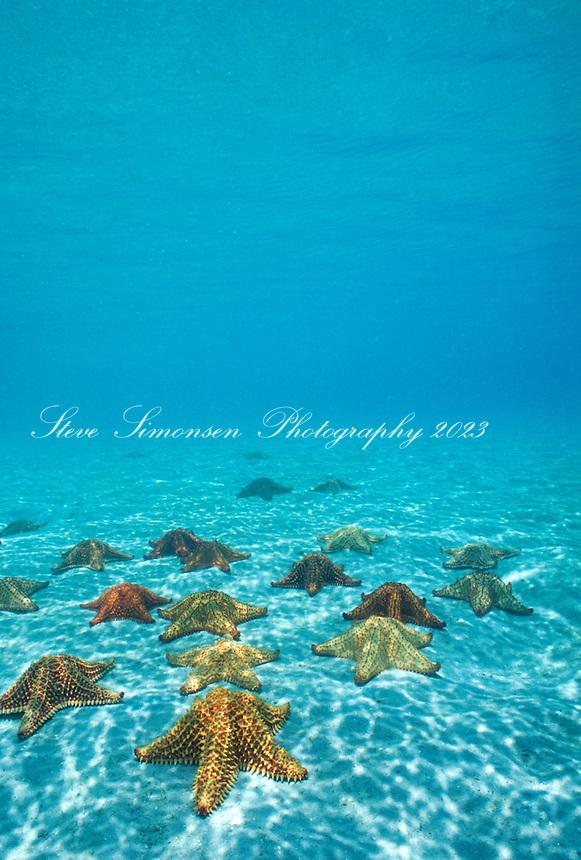 Sea Stars<br /> Virgin Islands