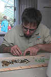 Preparing butterfly chrysalis at the Living Desert's Butterflies Alive