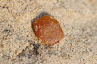Bernstein am Strand, im Sand, Bern-Stein, fossiles  Baumharz, amber