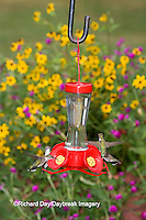 01162-12607 Ruby-throated Hummingbirds (Archilochus colubris) at feeder near flower garden,  Marion Co.  IL
