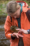 Hoh River, Hoh River Trust, The Nature Conservancy, TNC, fresh water invertebrates, Emily Howe, Marine Biologist, assessing river habitat, Noland Creek, spring, 2017 Olympic Peninsula, Washington State, Pacific Northwest, USA,