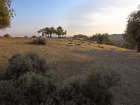 OR_LOCATION_45172