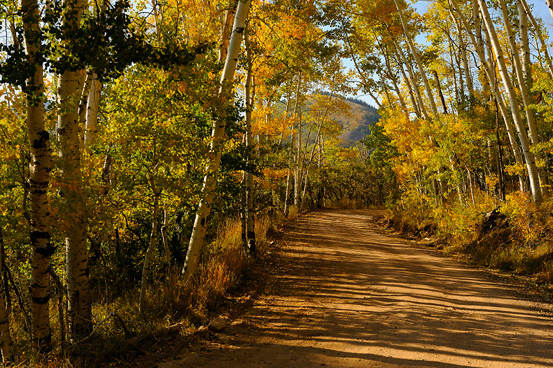 On Blue mountain north of Blanding, Utah the fall colors of the aspens lining the road give a sense of peace and beauty.