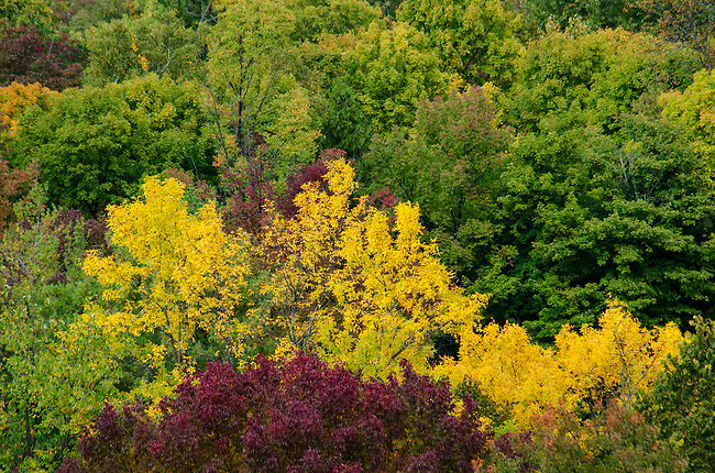 The forest canopy from the Shanty Bay overlook at Peninsula State Park in Door County, Wisconsin show the early stages of changing autumn color.