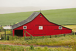 Red barn and grain field, northern Ore.