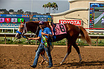 DEL MAR, CA  SEPTEMBER 2: #8 King of Speed waits for the results of an inquiry in the Del Mar Juvenile Turf on September 2, 2018 at Del Mar Thoroughbred Club in Del Mar, CA. (Photo by Casey Phillips/Eclipse Sportswire/Getty ImagesGetty Images