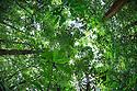 Looking up at rainforest canopy, Osa Peninsula, Costa Rica. May.