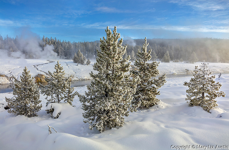 Yellowstone National Park, WY: Frosted trees and thermal activity along the Firehole River in the Upper Geyser Basin