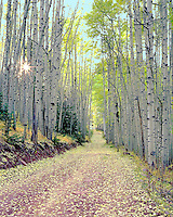 Aspen leaves cover a mountain road as the sun sets, creating a sun-star through the tree trunks.