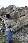 Wildlife photographer and Mountain Goat, Mount Evans, Colorado, Guided photo tours. .  John leads private, wildlife photo tours throughout Colorado. Year-round. .  John leads private photo tours in Boulder and throughout Colorado. Year-round.