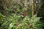 Foret de Combani . 150 kilometres de sentiers dont un GR font le tour de l'ile et permettent de decouvrir en profondeur les differents ecosystemes de Mayotte tout en visitant les villages mahorais. .