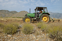 ALBANIA, Shkodra, farming of herbal and medical plants, plowing of old Lavender field with John Deere Tractor / ALBANIEN, Shkoder, Anbau von Heil- und Gewuerzpflanzen, Farm von Agro-Map, Pfluegen eines alten Lavendel Feldes mit John Deere Traktor