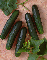 Agriculture - Cucumbers on a brown textured surface; Jade variety, studio.