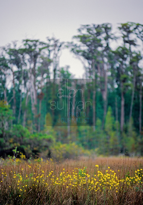 Flowers, trees and wetland vegetation in the Okefenokee Swamp of south Georgia, 1993.