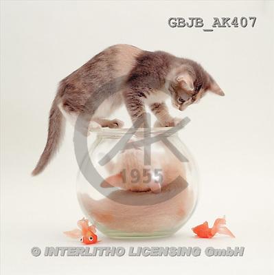 Kim, ANIMALS, fondless, photos(GBJBAK407,#A#) Tiere ohne Fond, animales sind fondo