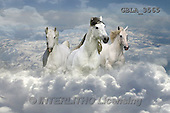 Bob, ANIMALS, REALISTISCHE TIERE, ANIMALES REALISTICOS, collage, horses, photos+++++,GBLA3565,#a#