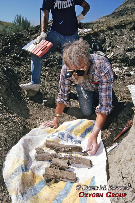 Don DeWitt Working On Triceratops