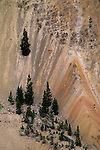 Trees growing on volcanic cliffs above Grand Canyon of the Yellowstone River, Yellowstone National Park, WYOMING