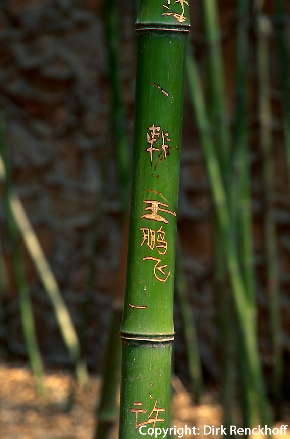 China, Peking, Bi Yun Si (Tempel), Bambus im Tempelgarten