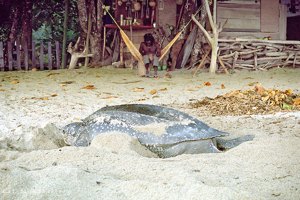 Craftsman and leatherback turtle on the beach